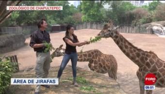 FOTO: Un recorrido por el Zoológico de Chapultepec, en la CDMX, 19 ABRIL 2019