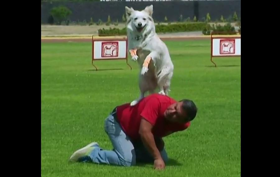 Unidad canina de la Policía Federal cumple 30 años y está lista para apoyar a la Guardia Nacional