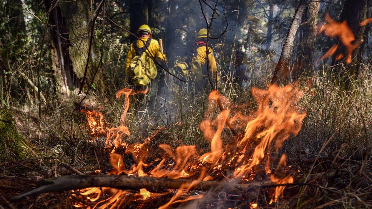 A la fecha los días/hombre aplicados han sido 194,540 días-hombre en el combate de incendios forestales (Cuartoscuro)