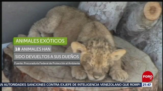 Foto: Animales Exóticos Asegurados Valle De México 7 de Mayo 2019