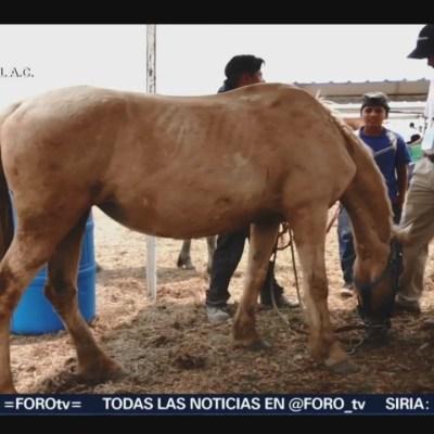 Asociación civil crea programa en favor de los equinos de trabajo