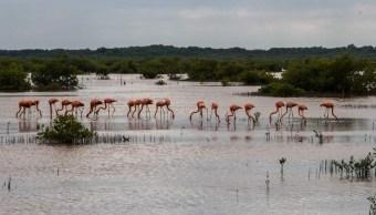 Foto: Aves migratorias resienten efectos del calor en Campeche, mayo 19 de 2019 (Twitter: @SEMARNATCAM)