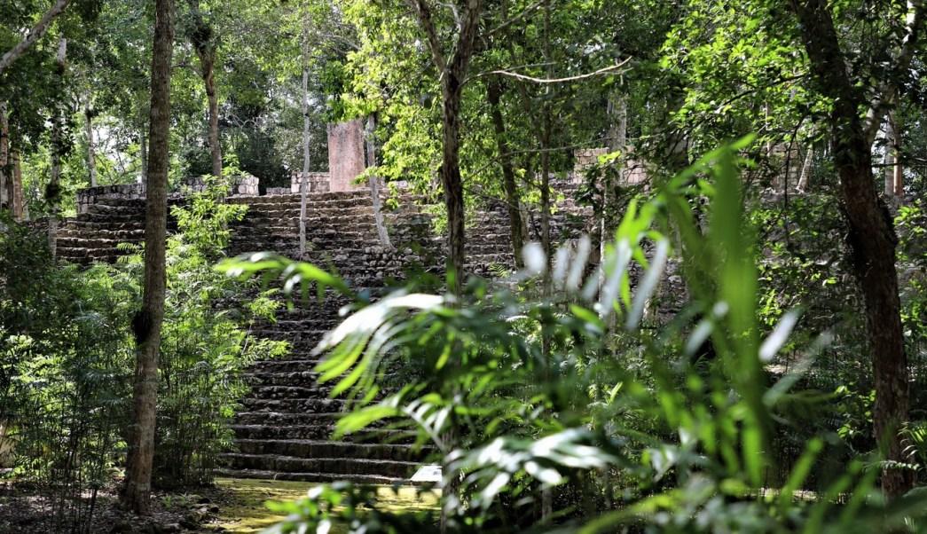 Foto: Reserva de la Biosfera de Calakmul, 23 de mayo 2019. Twitter @SEMARNATCAM