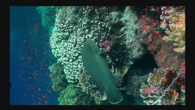 Foto: Científicos Misterio Arrecifes De Coral 29 Mayo 2019