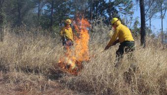 Foto: Combatientes laboran para apagar los incendios forestales, 11 mayo 2019