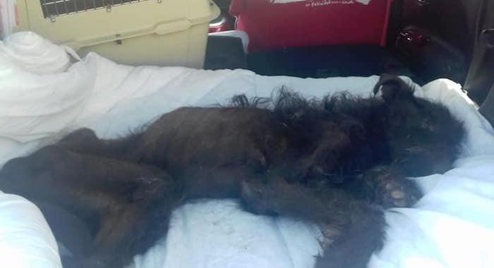 Foto Mujer dejó morir de hambre a perro en una terraza 30 mayo 2019