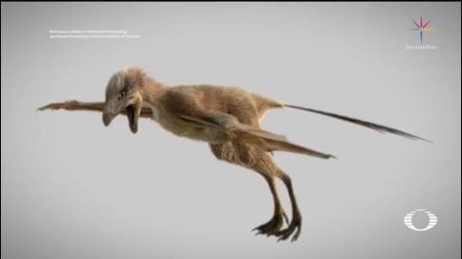 Foto: Descubren Fósil Dinosaurio China 10 de Mayo 2019