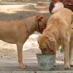 FOTO: Especialistas exhortan a vigilar a mascotas ante contaminación en CDMX