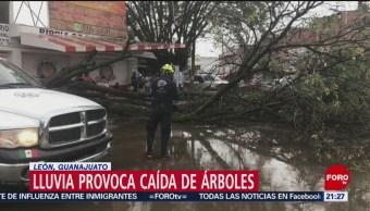 FOTO: Fuerte lluvia provoca caída árboles y postes en León, Guanajuato, 25 MAYO 2019