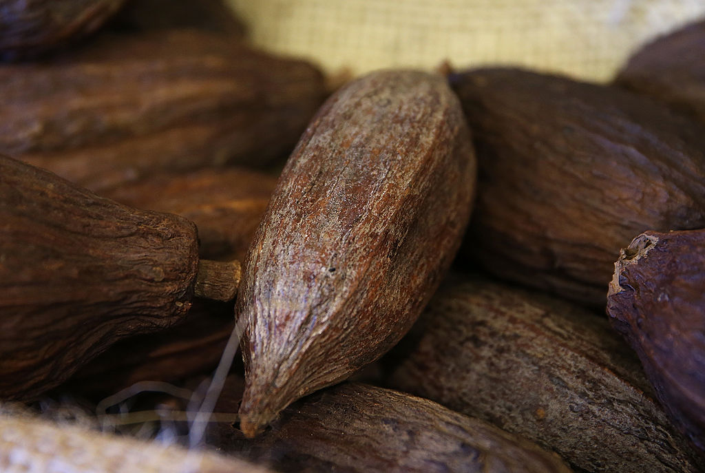foto semilla cacao 17 de marzo de 2014