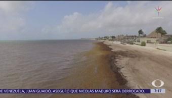 Gobierno de México cancela encuentro para combatir al sargazo en el Caribe