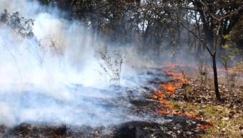 Cinco incendios consumen áreas naturales protegidas en Quintana Roo y Yucatán