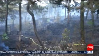 Foto: Incendio Forestal Ajusco 20 Mayo 2019
