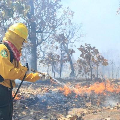 Calor complica trabajos para sofocar incendios forestales en Guerrero