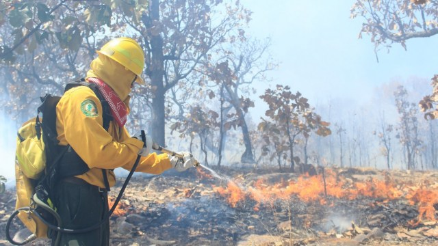 Foto: combate de incendios forestales, 22 de mayo 2019. Twitter @CONAFOR