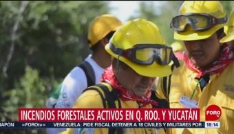 FOTO: Incendios forestales activos en Quintana Roo y Yucatán, 5 MAYO 2019
