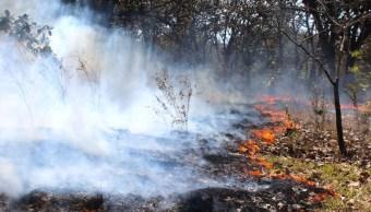 Calor dificulta extinción de cinco incendios forestales en SLP