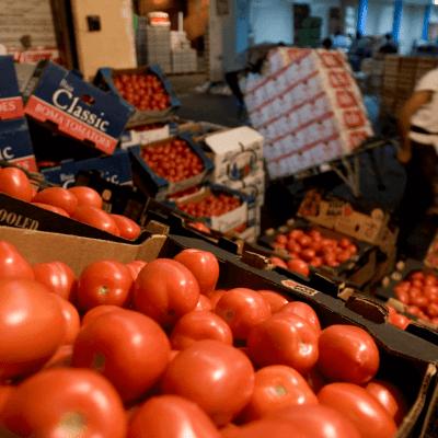 AMLO vincula decisión de EU sobre tomate a elecciones en ese país