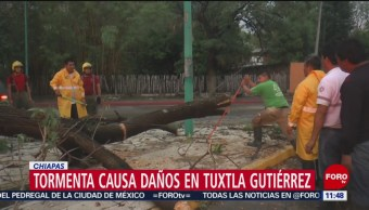 Lluvia daña vehículos y derriba árboles en Tuxtla Gutiérrez, Chiapas