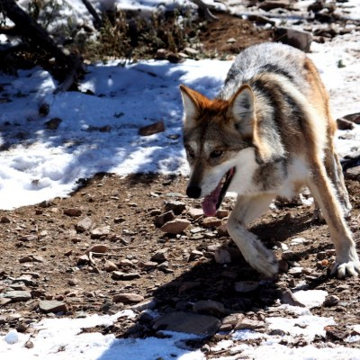 México, el país con el mayor número de especies en peligro de extinción de todo el mundo