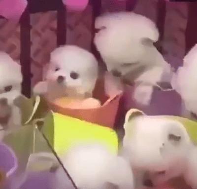 Perritos son usados como juguetes en máquina de peluches en China