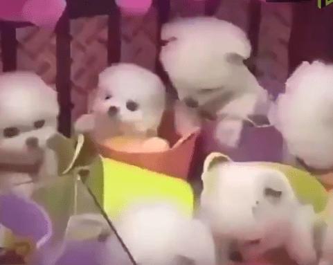 Foto: Perritos usados como peluche, 14 de mayo de 2019, China