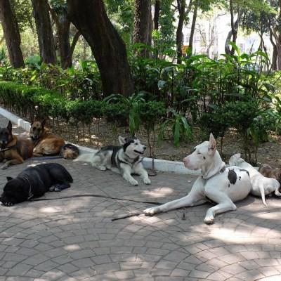 Video: Detienen a dos perros por meterse a una fuente en CDMX