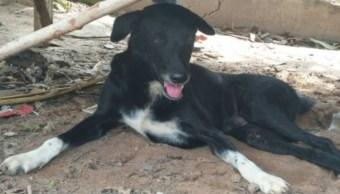 Perro salva a bebé abandonado y enterrado en campo de Tailandia