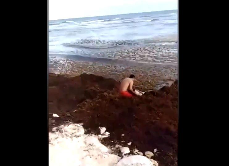 Foto Rescatan a turista entre sargazo en Playa del Carmen 13 mayo 2019