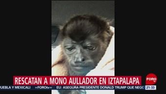 Foto: Rescatan Mono Aullador Iztapalapa CDMX 10 de Mayo 2019