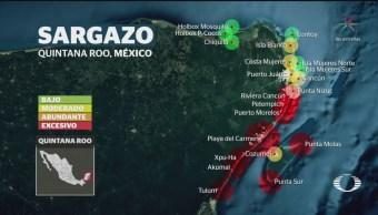 Foto: Sargazo Puerto Morelos Playa Del Carmen Tulum QROO 24 Mayo 2019