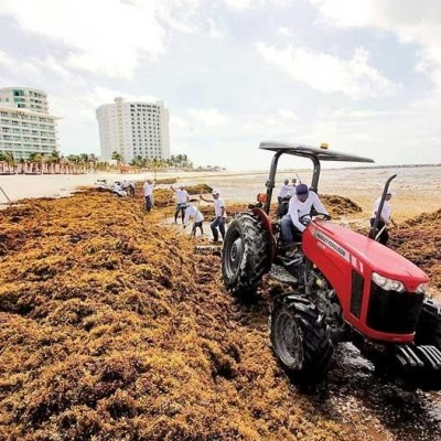 Invasión masiva de sargazo afecta 6 playas de Quintana Roo