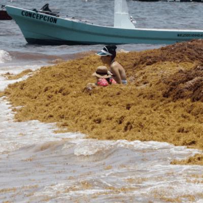 Sargazo regresa al Caribe mexicano y aumentará, según expertos