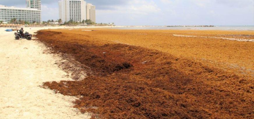 Barreras, costosa alternativa para contener el sargazo en costas de Quintana Roo