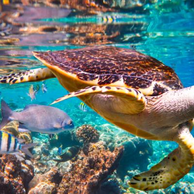 Un millón de especies están en peligro de extinción por culpa de los humanos