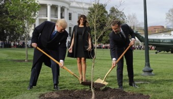 Foto Muere árbol que Trump y Macron sembraron para simbolizar su amistad 12 junio 2019