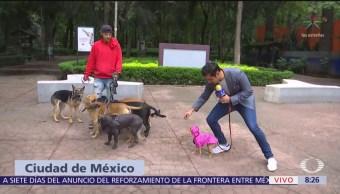 CDMX aplica nuevas multas para dueños de perros