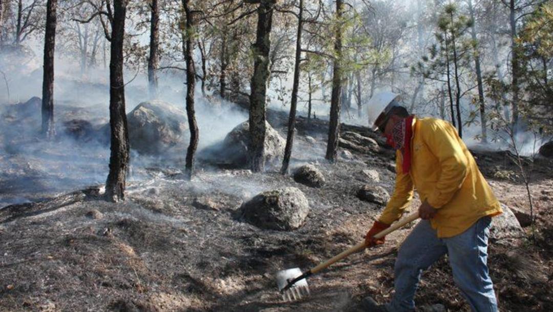 Foto: Hasta el 10 de junio, las lluvias extinguieron 5 incendios que había en Quintana Roo, 30 de junio de 2019 (Conafor)