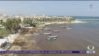 El sargazo se come las playas de México