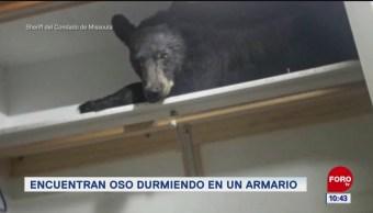 Extra, Extra: Encuentran oso durmiendo en un armario