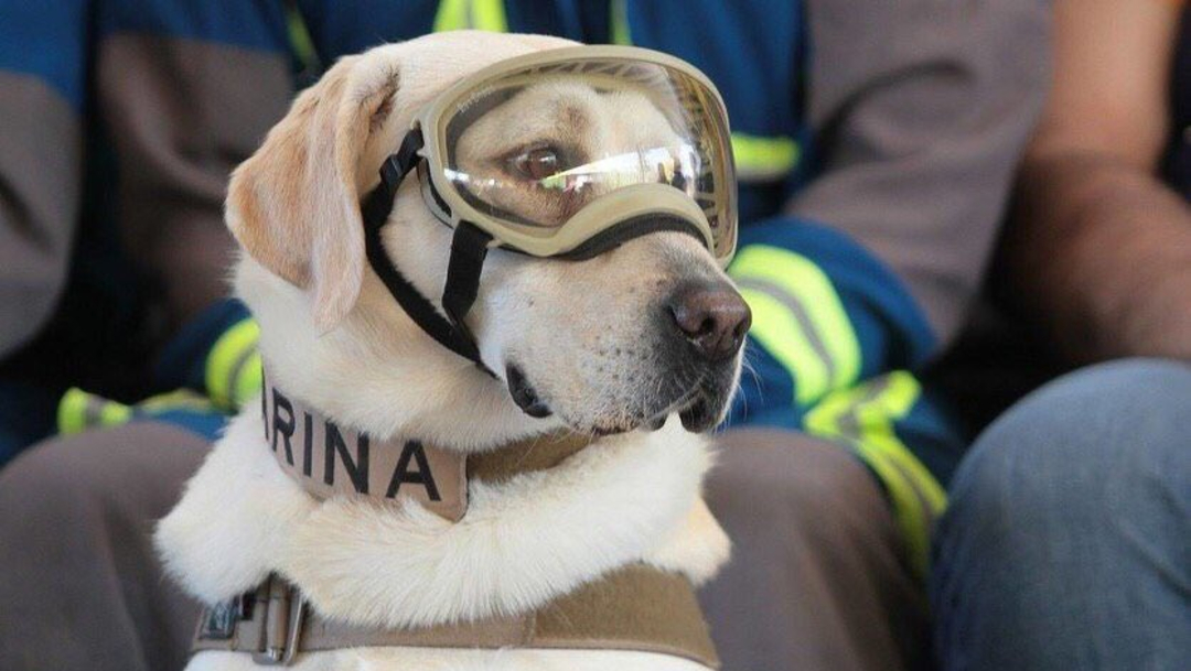 foto ¡Gracias Frida! Se jubila la perrita rescatista del 19-S 24 junio 2019