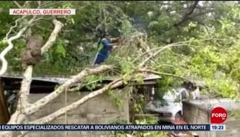 FOTO: Fuertes lluvias dejan árboles caídos en Acapulco, Guerrero, 15 Junio 2019