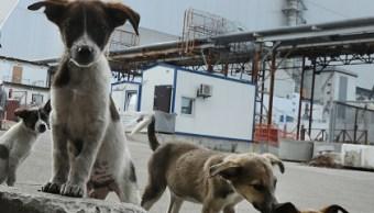 Denuncian a alcalde por exterminar 200 perros callejeros en Jalisco