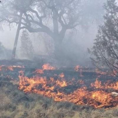 Se mantienen activos 14 incendios forestales en Chihuahua