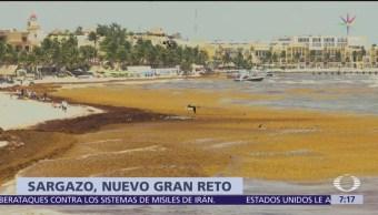 Mil toneladas de sargazo se recolectan a diario en Quintana Roo