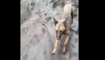 Perrito agradece a rescatistas que lo salvaron del lodo en San Gabriel, Jalisco