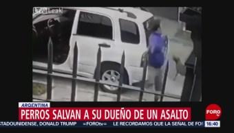 FOTO: Perros salvan a su dueño de un asalto en Argentina