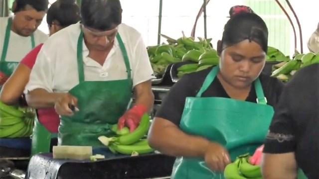 Productores chiapanecos emplean 15 mil centroamericanos;