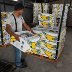Foto: Plátanos producidos en México para exportación a Estados Unidos, 31 de mayo de 2019, Ciudad Hidalgo, México