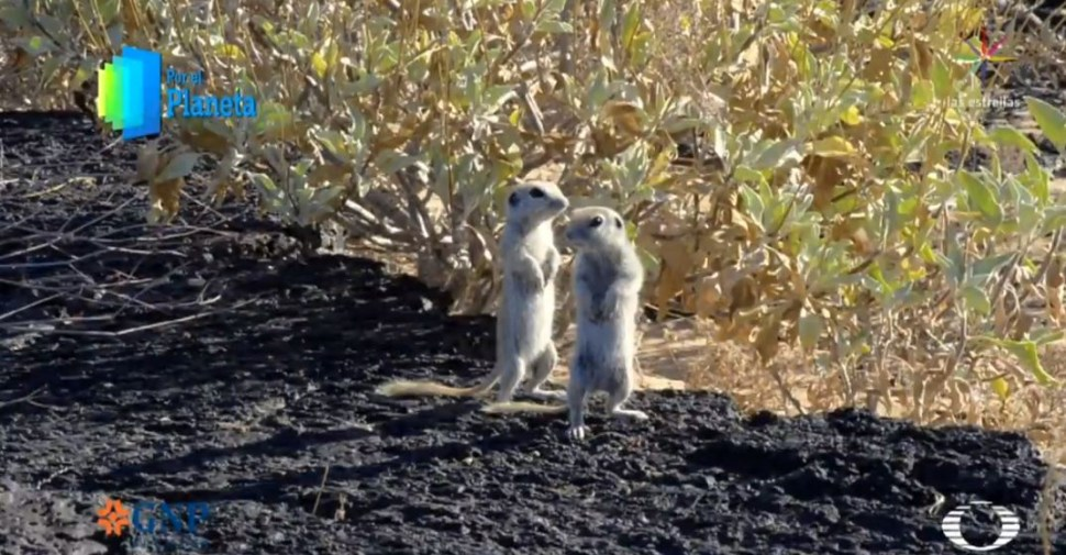 Foto Víboras y tortugas habitan en Sonora, la piel del desierto 25 junio 2019